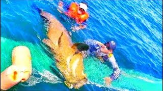 Fishing Huge Bottom Fish Sea Creature Flips Fishermans Canoe Videos - East Coast Florida Big Fish
