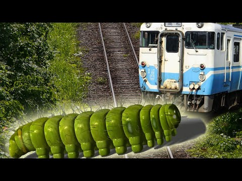 Train stopped by caterpillars; World's longest railway connects China to Spain - Compilation