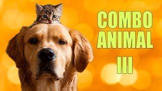 COMBO ANIMAL 3
