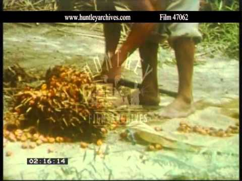 Indonesia.  Palm oil production.  Archive film 47062