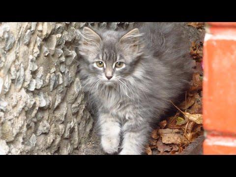 Fluffy kitten is afraid of me