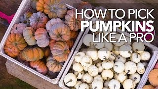 How to Pick Pumpkins Like a Pro (sneak preview)
