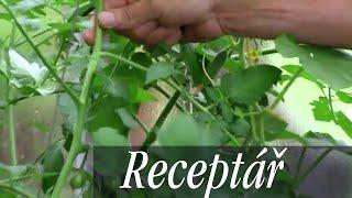 Jak pěstovat rajčata - tipy pro zvýšení úrody, jak je ochránit před plísní