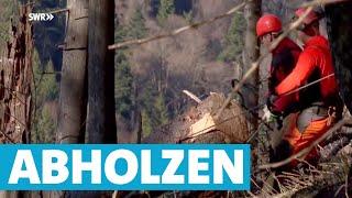 Baumfällung extrem: Wenn über 500 Bäume gefällt werden | Landesschau Baden-Württemberg