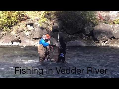 Fishing In Vedder River ( 11/10/2019