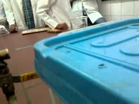 despair swim test ,, faculty of pharmacy cairo university