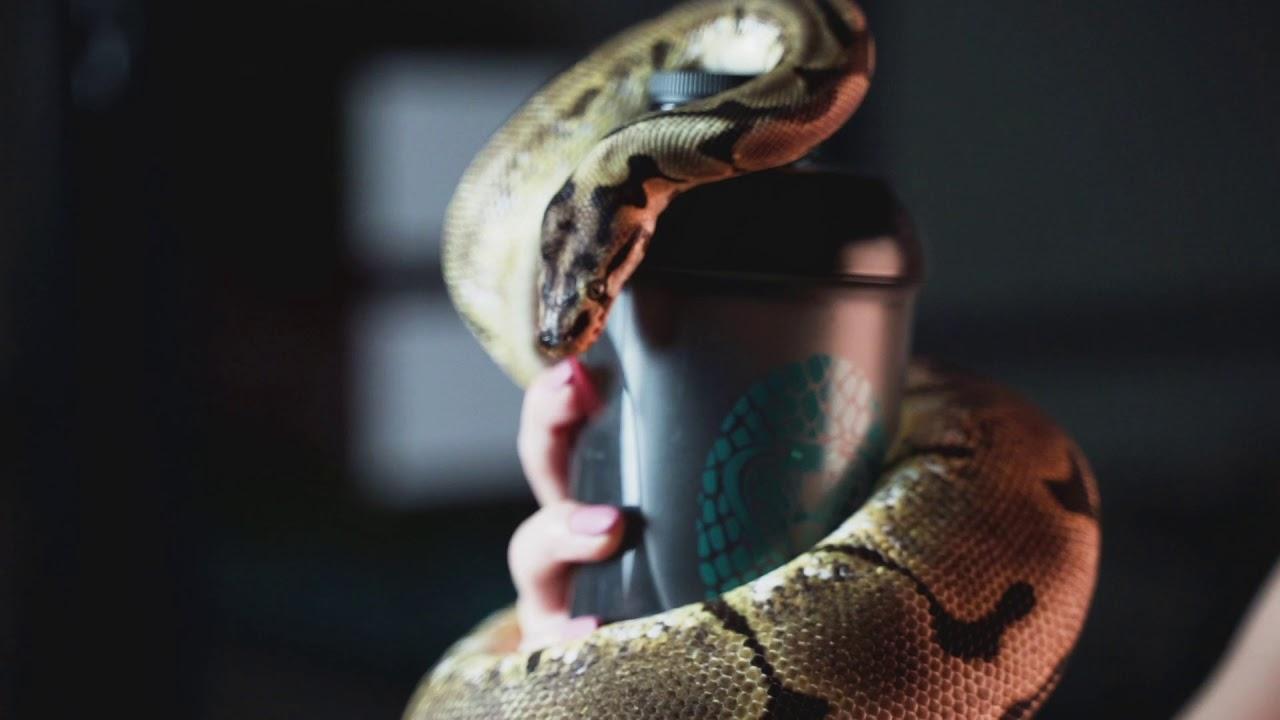 kígyó zsírégető