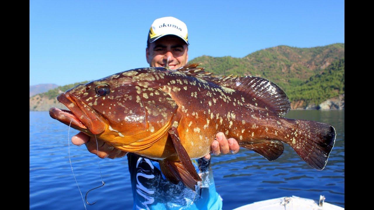 Canlı Balık Sırtısı İle Orfoz Avı / Dusky Grouper On Live Bait