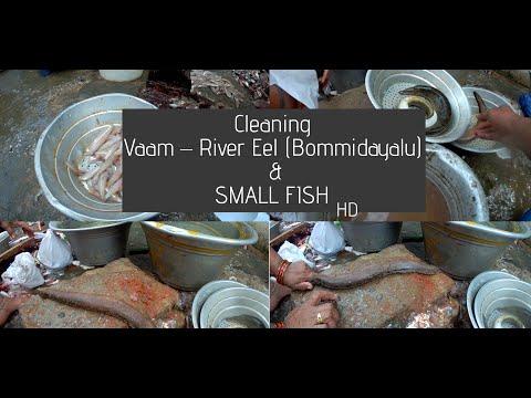 Vaam – River Eel | SMALL FISH | Fish Cleaning |  చిన్న చేప | Nellore Fish Market | Fish Cleaning |