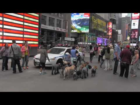 Coralee NYC Professional Dog Walker