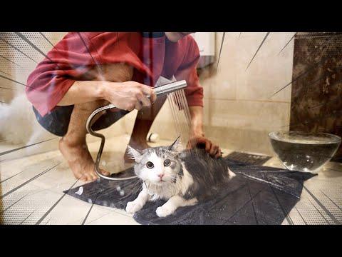개냥이는 목욕도 잘 할까?
