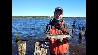 Ловля судака на джиг с берега весной Рыбалка на спиннинг