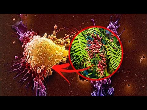Cures for CANCER? Natural PERUVIAN Alternative CANCER Treatment - POWERFUL Herbs That DESTROY Cancer