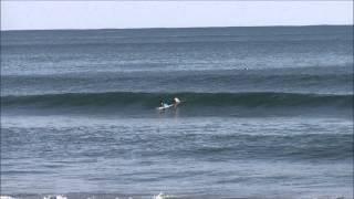 プロサーファー大原洋人 vqs surf tour sashimi fish 鴨川