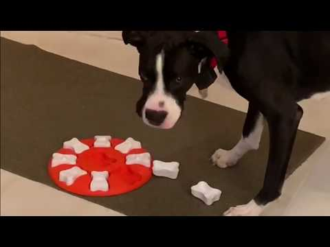 Two Dogs Trying The Outward Hound Nina Ottosson Dog Smart Treat Puzzle