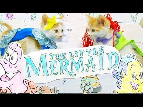 Let This All Kitten Version Of The Little Mermaid Be Part Of Your World