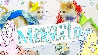 Repeat youtube video Disney's The Little Mermaid (Cute Kitten Version)