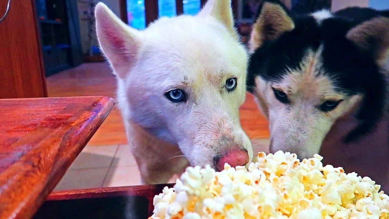My Dog Eating Popcorn ASMR
