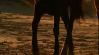 wild horses music video