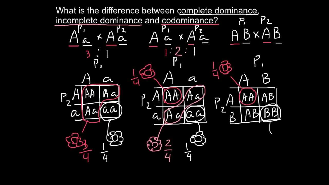 Complete Incomplete Dominance And Codominance