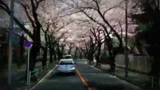 SAKURA Tunnel 3..color me cherry pink..I wanna sex u up!