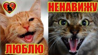 Как Узнать, Что Кошка Вас Любит! 10 Признаков, Что Кошка Любит Вас!