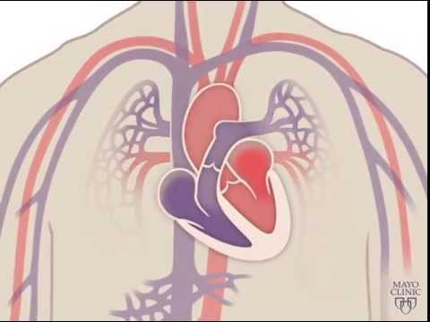 The Heart and Circulatory System - How They Work - YouTube