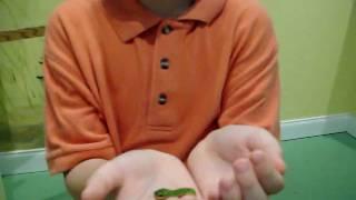 Visit Citrus County Homosassa Butterfly