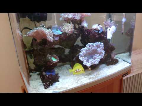 all about salinity/salt level in a reef aquarium! What to do