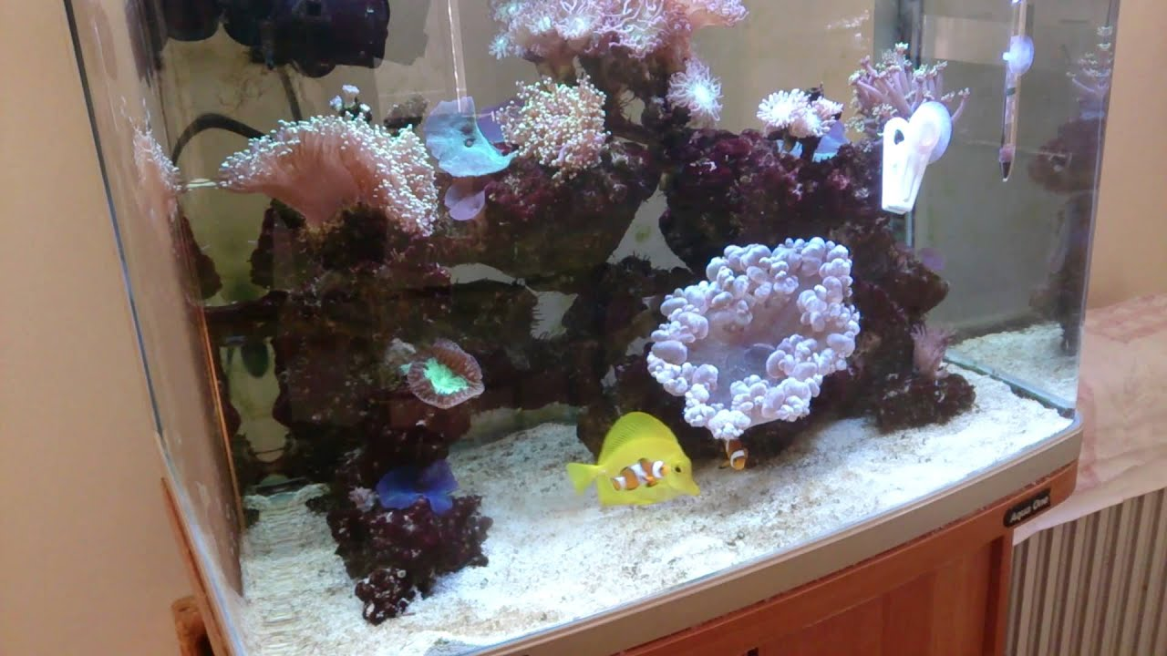 all about salinity salt level in a reef aquarium What to do about