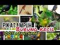 Suara Pikat Burung Kecil Ampuh  Lengket  Mp3 - Mp4 Download