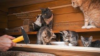 Летом в приюте для животных ремонт своими руками | Я волонтер
