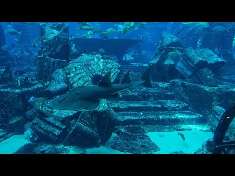 Edgar Cayce the civilization of Atlantis Will Soon Be Discovered