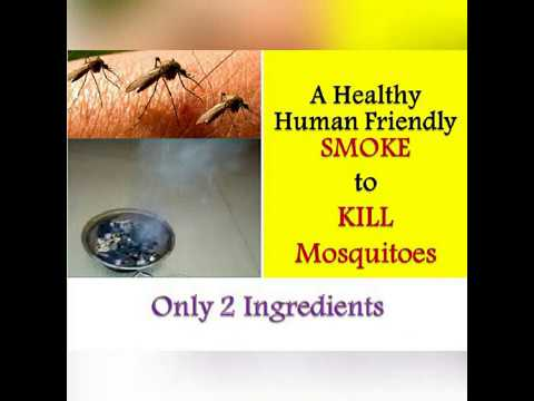 Get Rid Of Mosquitoes In 15min Home Remedy 100 Working Mosquitos