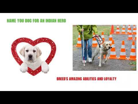 Unique Dog Names Ideas - Unique Names For Your Labrador Retriever Dog