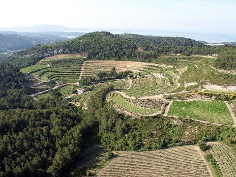 Discovering Provence wines from Bandol region at Chateau de Pibarnon estate. Obiwine
