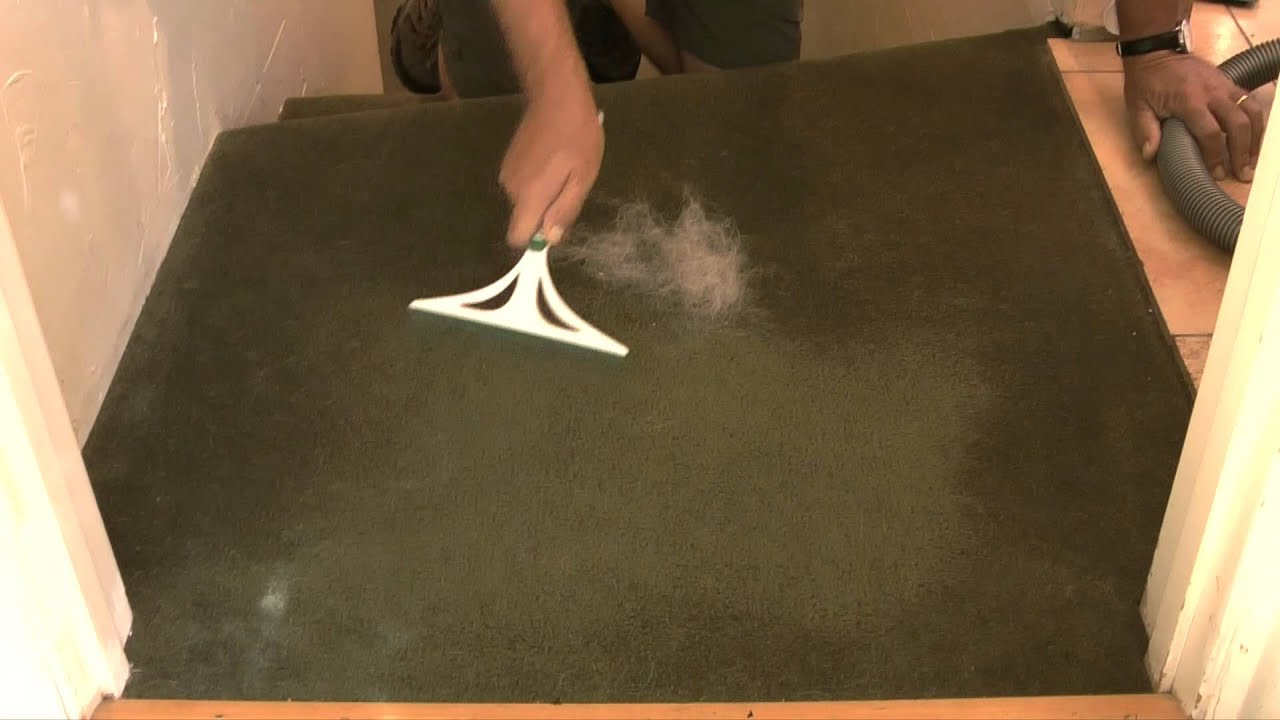 How To Remove Dog Hair From Carpet Youtube