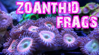 how to frag zoanthids
