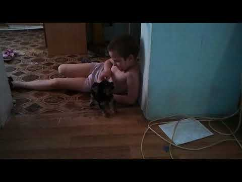 Вопрос: Какую роль играет собака в судьбе аутиста?