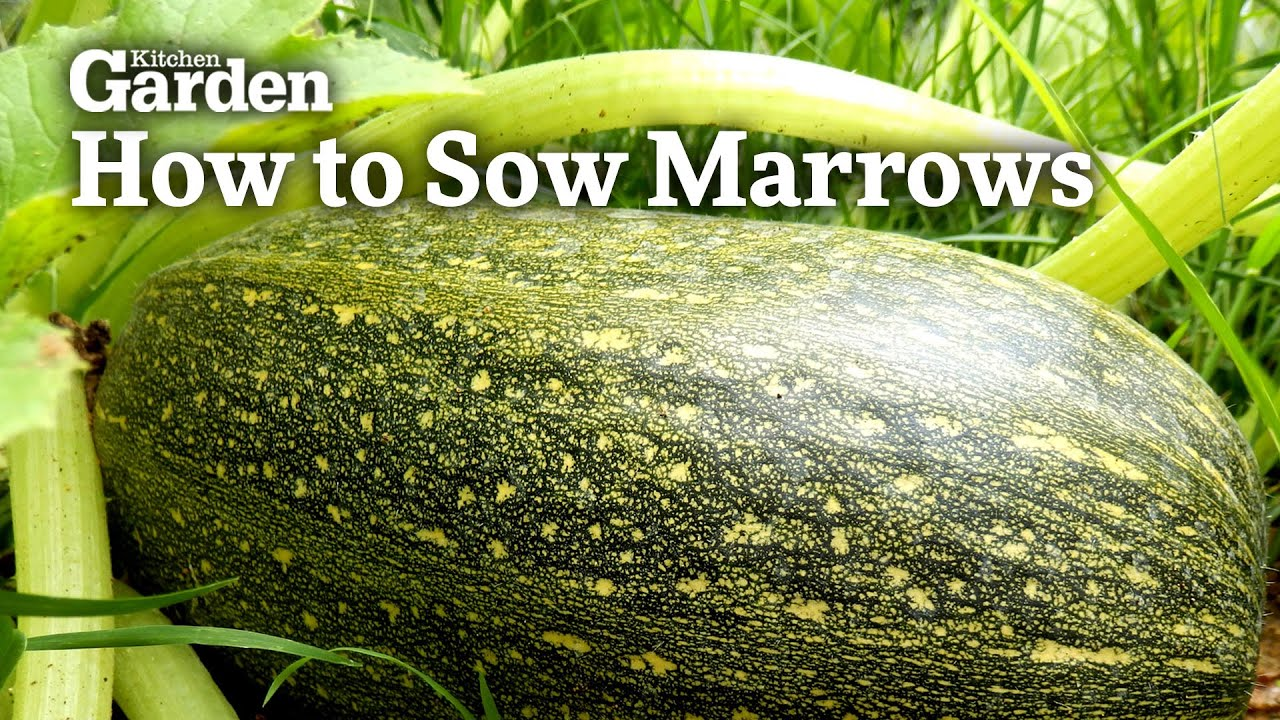 Kitchen Garden Magazine Grow Marvellous Marrows How To Guide Kitchen Garden Magazine