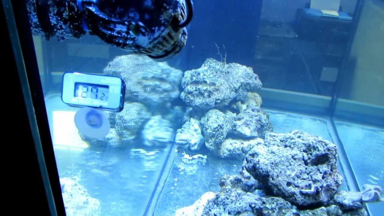 Juwel rio 350 liter zee aquarium youtube for Aquarium 350 litres