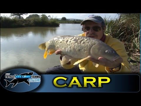Float fishing for carp with cat food bait series 1 for Cats go fishing