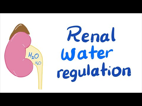 Renal ECF Volume Regulation