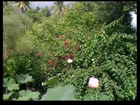 La Reunion Jardin D Eden Youtube