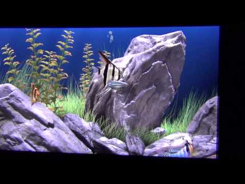 Живые обои аквариум.