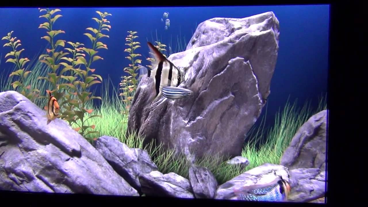 скачать обои на рабочий стол анимация аквариум