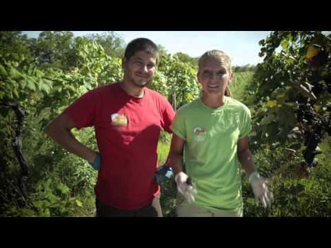 Wegmans Organic Farm: Grapes