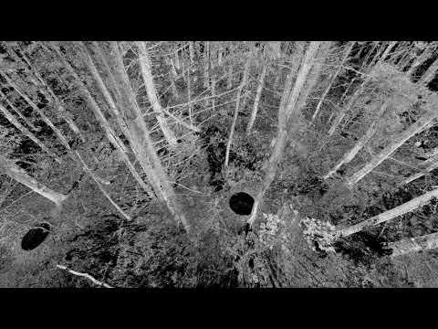 Harvard Forest Terrestrial Laser Scanning