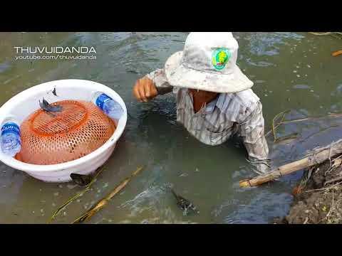 0810 Theo Cao Thủ Mò Cá Lóc ở Hậu Giang l Catching Snakehead Fish In The Field