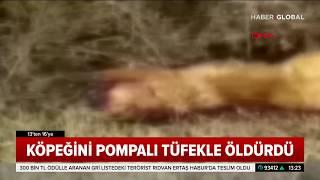 Cani Adam Köpeğini Pompalı Tüfekle Öldürüp Videosunu Çekti
